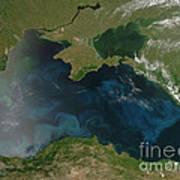 Black Sea Phytoplankton Poster by Nasa