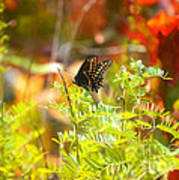 Black Swallow Tail Butterfly In Autumn Colors Poster