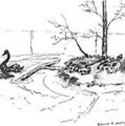 Black Swan And Sliders Poster