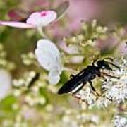 Black Wasp 1 Poster