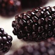 Blackberry Poster