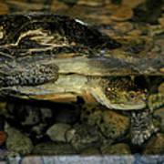Blandings Turtle Poster