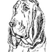 Bloodhound-art-portrait Poster