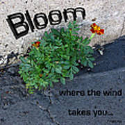 Bloom Where The Wind Takes You Poster