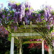 Blooming Wisteria  Poster