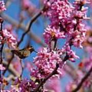 Blossoming Bird Poster
