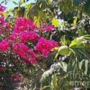 Blossoms And Breadfruit Poster