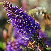 Blue Brush Bloom Poster