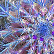 Blue Cactus Poster
