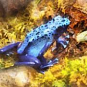 Blue Dart Frog Poster