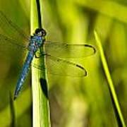 Blue Dragonfly 1 Poster