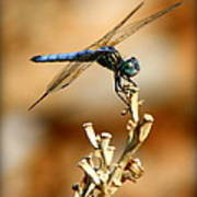 Blue Dragonfly Poster