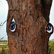 Blue Eyed Pine Poster