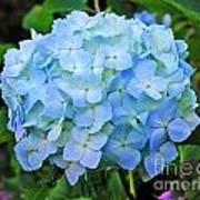 Blue Garden Flower Poster