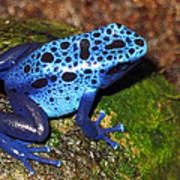 Blue Frog Poster