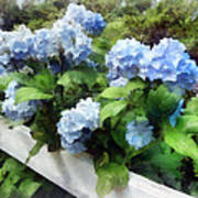 Blue Hydrangea On White Fence Poster
