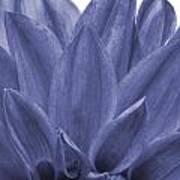 Blue Petals Poster by Al Hurley