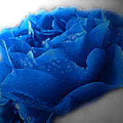 Blue Rose With Drops Poster