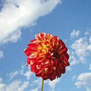 Blue Sky Nature Art Prinst Red Dahlia Flower Poster
