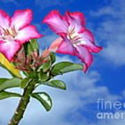 Blue Sky Pink Flower Poster