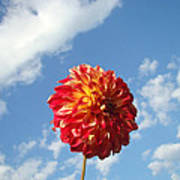 Blue Sky White Clouds Floral Art Prints Dahlia Flowers Poster