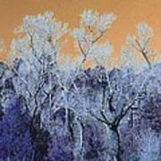 Blue Trees New Mexico Poster
