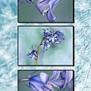 Bluebell Triptych Poster
