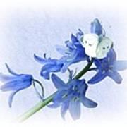 Bluebells And Butterflies Poster
