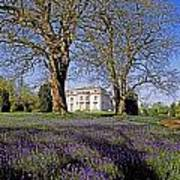 Bluebells In The Pleasure Grounds, Emo Poster