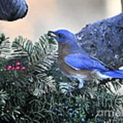 Bluebird Christmas Wreath Poster