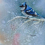Bluejay In Winter Poster