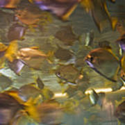 Blurred Image Of Fish Swimming In An Poster