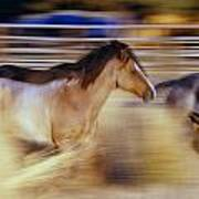 Blurred View Of Horses Running Through Poster