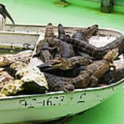 Boat Full Of Alligators  Poster