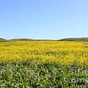 Bodega Bay . Yellow Field . 7d12403 Poster by Wingsdomain Art and Photography