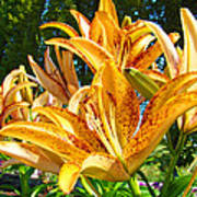 Bold Colorful Orange Lily Flowers Garden Poster