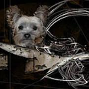 Bone-a-fide-ride Poster