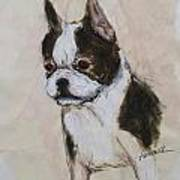 Boston Terrier Puppy Love Poster