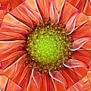 Botanical Swirl Poster