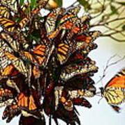 Bouquet Of Butterflies Poster