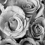 Bouquet Of Roses With Water Drops In Black And White Poster