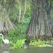 Bow Legged Egret Poster
