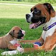 Boxer Mommy And Pup Poster