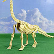 Brachiosaurus Dinosaur Skeleton Poster