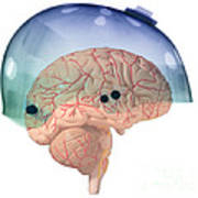 Brain In Skateboard Helmet Poster