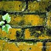 Brick Ivy Poster