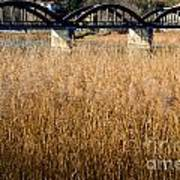 Bridge And Pampas Grass Poster