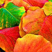 Bright Beautiful Fall Leaves Poster