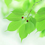 Bright Green Leaves Poster