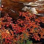 Bright Leaves At Swift River Poster